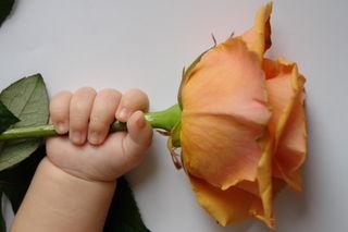 Baby_flower_hand