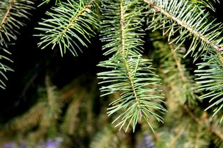 are you anxious to take down your tree now that the holidays are over take advantage of the city of chicagos holiday tree recycling program - Chicago Christmas Tree Recycling