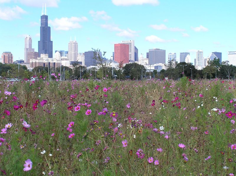 Northerlyisland